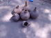 पग़स ओसो बोग़्काङ  Water containers and a ladle made out of gourds