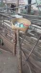 A storage basket in the yard of a Madia family
